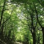 Caminhos de Santiago - Trilha nos Pirineus